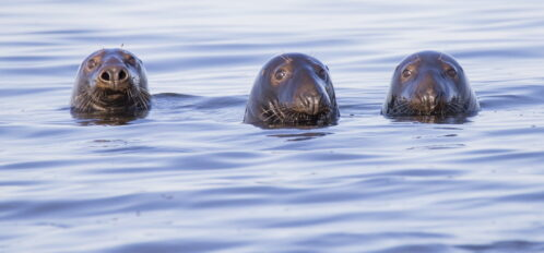 Harbor seals in Boothbay Harbor: things to do in Boothbay Harbor.