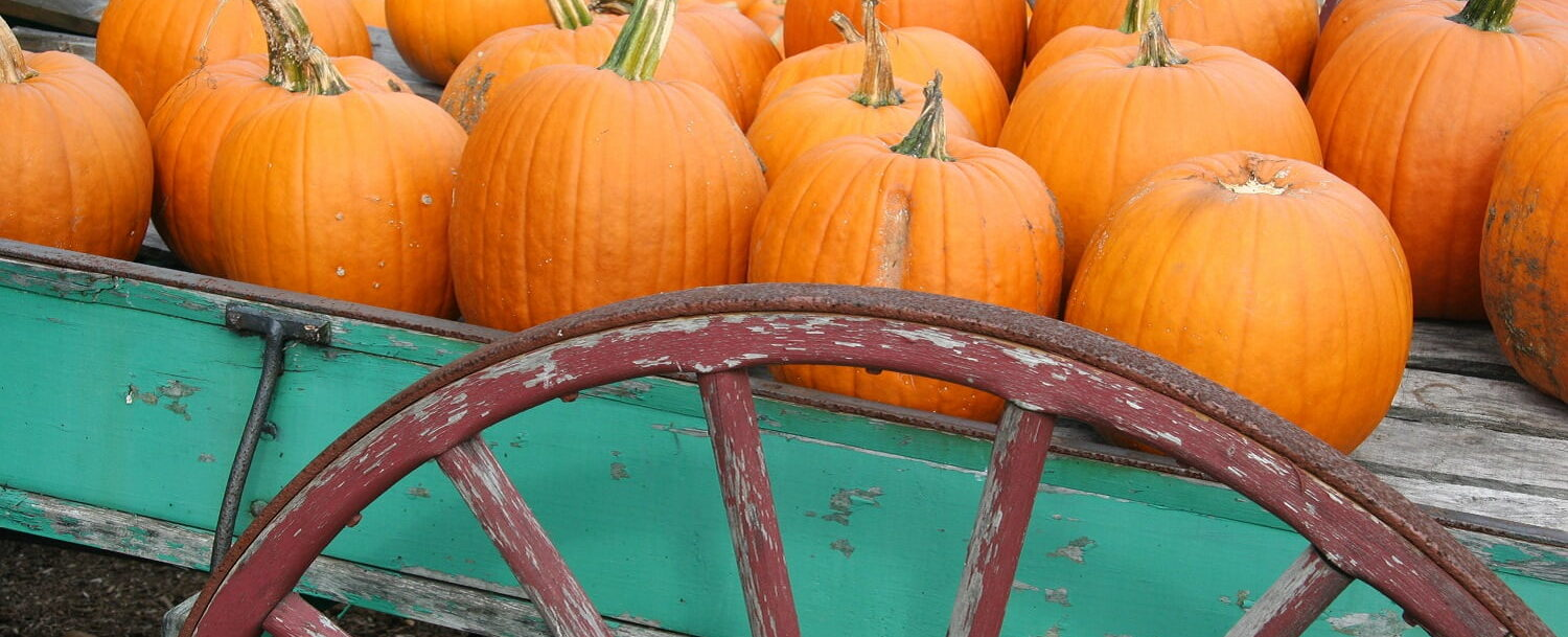 Pumpkins on a wagon at a Midcoast Maine autumn event: Fall in Maine.